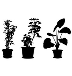 set of different plants in pots vector image