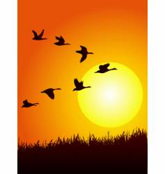 Wild goose in sunset vector