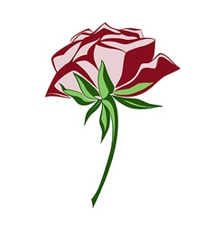 Colored rose vector image