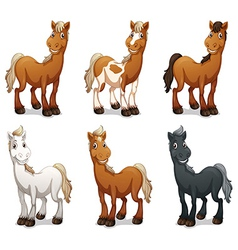 Six smiling horses vector image