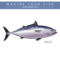 Tuna marine food fish vector