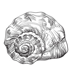 hand drawing seashell-12 vector image