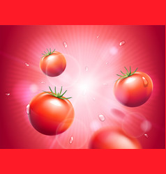 juicy tomatoes with water drops on red radiant vector image vector image