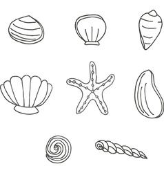 Sea shells and starfish vector image