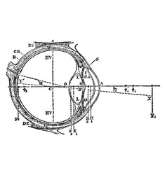 Transverse section of an ideal eye vintage vector