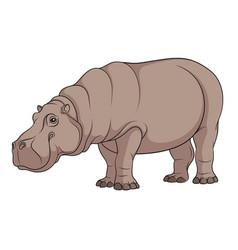 color of a hippopotamus vector image vector image