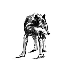 ink sketch wolf vector image