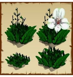 Stages of growth orchid planting and withering vector image