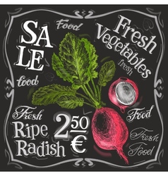 Ripe radish logo design template fresh vector