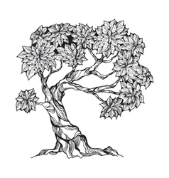 Gnarled tree with leaves vector