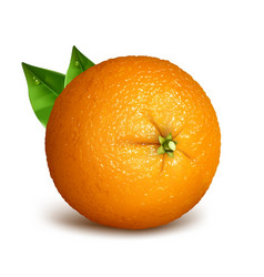 Orange whole with leaves vector