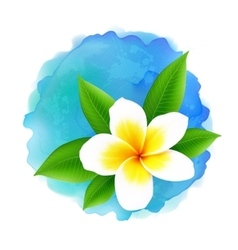 Frangipani flower on blue watercolor vector