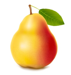 fresh ripe pear vector image vector image
