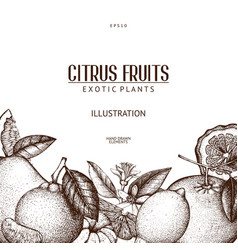 Ink hand drawn design with citrus fruits vector