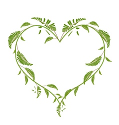 Beautiful green vine leaves in a heart shape vector