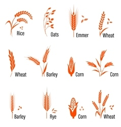 Cereals icon set with wheat vector image vector image