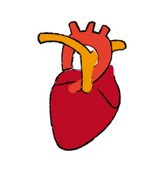 Human heart anatomy medical science vector
