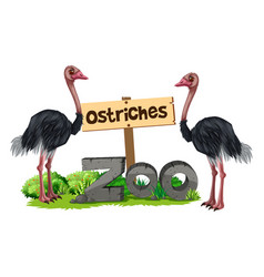 Ostriches at the zoo vector