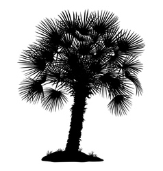 Palm tree and grass silhouettes vector