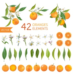 Oranges Flowers and Leaves Lemon Bouquetes vector image