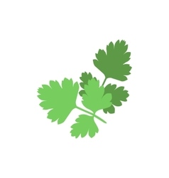 Silhouette of parsley on a white background vector