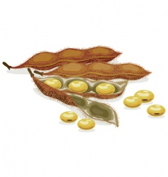 soybean realistic vector illustration vector image