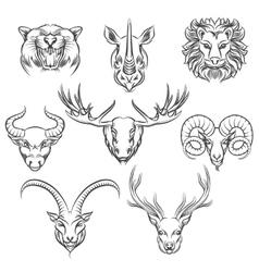 Wild animals hand drawn heads vector image vector image