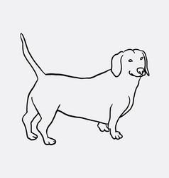 Teckel dog hand drawing vector
