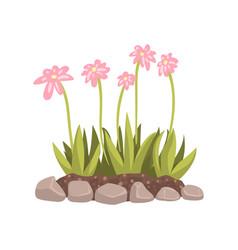 Flowers growing in the flowerbed cartoon vector