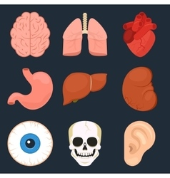 Flat icon set of the human organs vector