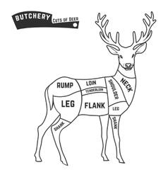 Deer meat cuts vector image