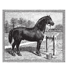 French draught horse vintage vector