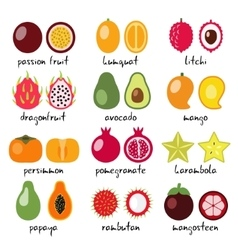 Exotic fruits collection vector