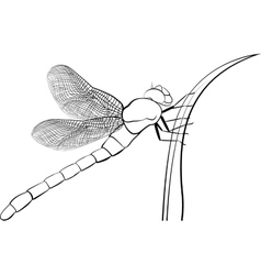 stylized predatory insect dragonfly isolated on vector image
