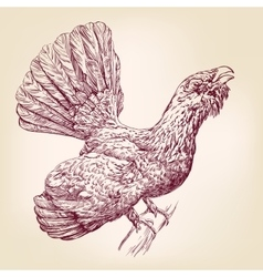 Wood grouse hand drawn llustration vector