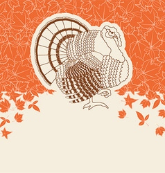 Turkey bird for thanksgiving day card for text or vector