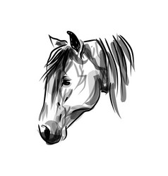 ink sketch head horse vector image