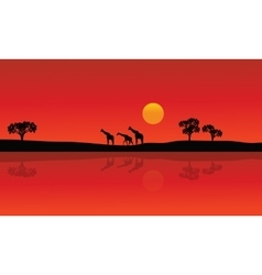 Silhouette of giraffe with red backgrounds vector