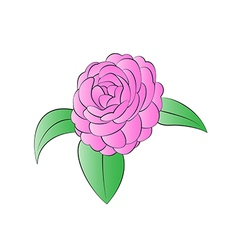 Blooming camellias vector