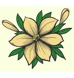 Flower with leaves in a hand-painted graphic style vector