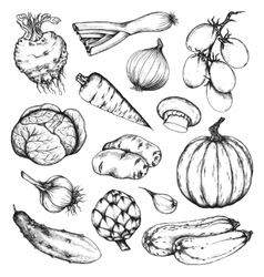 Organic natural fresh vegetables set vector image vector image