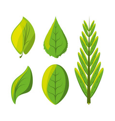 Set of natural and ecology icons leaves design vector