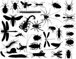 bug outlines vector image