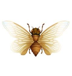 Generic cicada vector image vector image