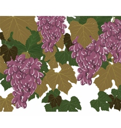 Grapes clusters set vector image
