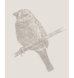 Hand drawing bird sketch vector image vector image