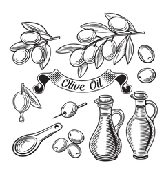 Hand Drawn decorative olive set vector image
