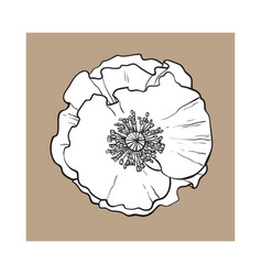 Open chamomile blossom top view sketch style vector