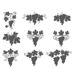 Grapes bunches set vector