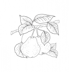 pear tree vector image